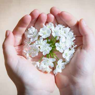 flower-blossom-bloom-white hands