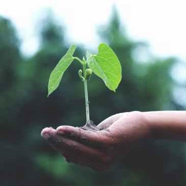 growth, plant
