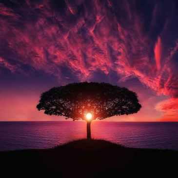 light, tree, illumination