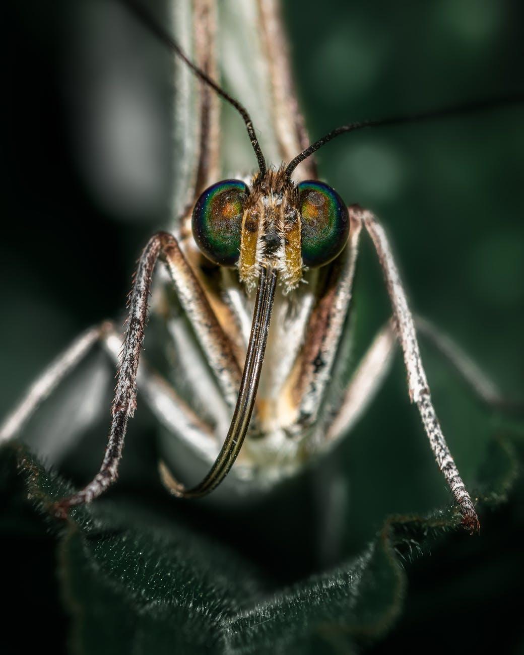 April 25th: World Malaria Day