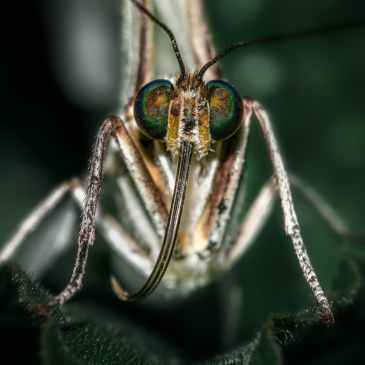 malaria, health, insect