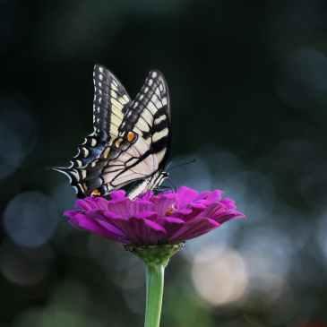 butterfly, evolve